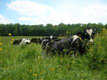 Production laitière Ferme des Clérambauts - Aisne